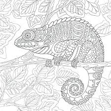 Chameleon Coloring Pages Printable Visitpollinoinfo