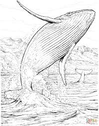 blue whale baby and seals coloring page free printable coloring