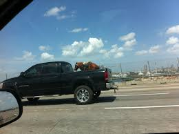 I've seen dogs in the back of pickup trucks, but never this... : pics
