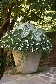 Design A Shade Garden  HGTVContainer Garden Shade Plants