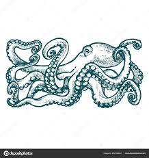 синий осьминог щупальцами акварельный рисунок белом фоне эскиз