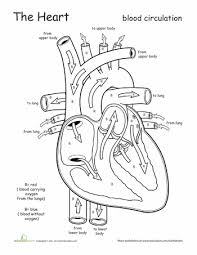 Small Picture Awesome Anatomy Follow Your Heart Worksheets Anatomy and