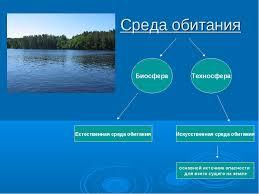 Эволюция среды обитания переход от биосферы к техносфере реферат  Эволюция среды обитания переход от биосферы к техносфере реферат