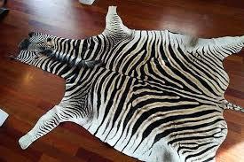 no felt zebra skin rug grade a genuine plus free zebra skin rug authentic zebra