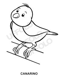 Disegni Immagini Da Stampare E Colorare Uccelli E Volatili Di Ogni