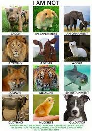 best animal rights quotes ideas animal rights this shows how animals are used for their meat or skin due to a lot of