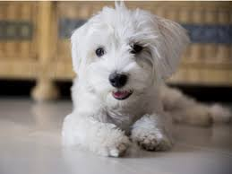 What Causes Dog to Wheeze | What to Do for Dog Wheezing | petMD