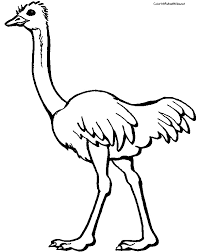 Small Picture Ostrich Coloring Pages Clipart Panda Free Clipart Images