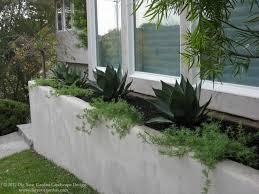 Modern Landscape with Architectural Plants - Greenbrae, CA modern-landscape