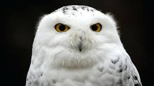 What Does Owl Look Like Owl Purdue Apa In Text Citations