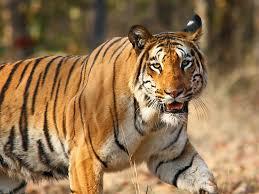 wildlife of india