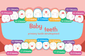 Teeth Development In Children From Baby Teeth To Permanent