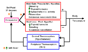 Chapter 2 Control Systems And Homeostasis