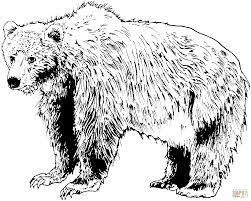 Small Picture Brown Bear Coloring Pages And Print For adult
