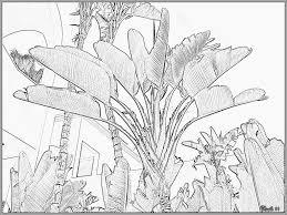 Coloriage Palmier Voyageur Imprimer Pour Les Enfants Dessin