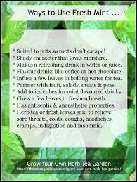tips for using fresh mint
