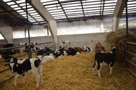 Министерство сельского хозяйства и продовольствия Республики Татарстан Семинар совещание по итогам работы отрасли животноводства за 2017 год в Сармановском районе