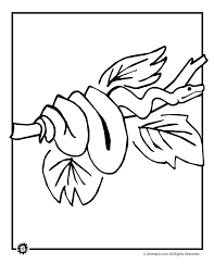 rainforest animal coloring pages animal jr
