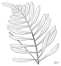 fern tree drawing. click the fern tree drawing