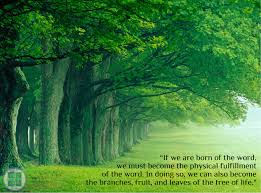 Tree Of Life Quote Mesmerizing TREE OF LIFE Quote Man Hee Lee Shinchonji Unmasked