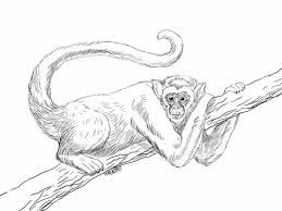 Small Picture Monkeys coloring pages Free Coloring Pages