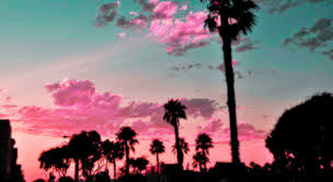 Palm trees tumblr header Aesthetic Palm Tree Tumblr Header Trendnet Palm Tree Tumblr Header 82079 Trendnet