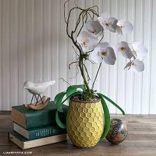 Paper Orchid Flower Simple Paper Orchid Plant Lia Griffith