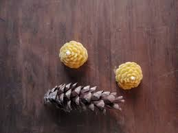 Pine Cone Candles Golden Forest Candles Prettydreamer