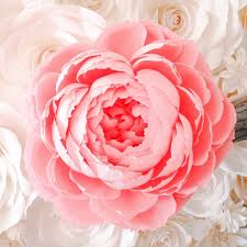 Paper Flower Templates Free Download Free Download Sample Paper Flower Giant Crepe Paper Peony Giant