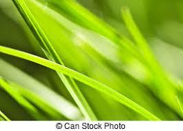 grass blade close up. Blades Close Up. Green Grass Background Blade Up