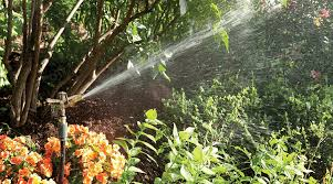featured image the best sprinkler for large areas