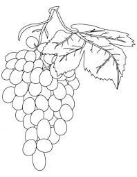 Small Picture 8 best Grapes Coloring Pages images on Pinterest Coloring pages