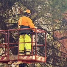 Tree Risk Assessment Certified Arbor Care