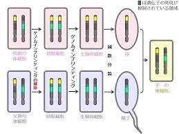 ゲノム イン プリンティング