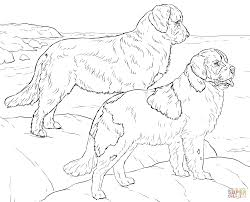 Small Picture Newfoundland Dogs coloring page Free Printable Coloring Pages