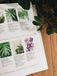 Badezimmer Pflanzen Wenig Licht Drewkasunic Designs
