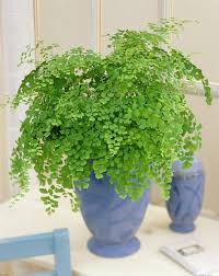 best low light office plants. 17 Best Plants To Grow Indoors Without Sunlight Low Light Office