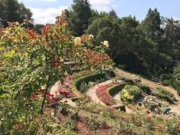 berkeley rose garden june 7 2018