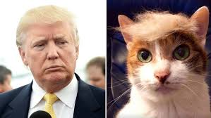 Cat Hair Style cats and dogs rocking donald trumps hair 4102 by stevesalt.us