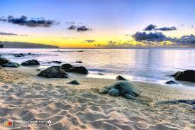 Laniakea Beach Honu Hawaii Pictures