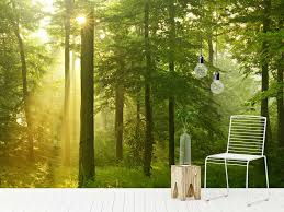 summer outdoors wallpaper. Exellent Wallpaper Experience The Great Outdoors From Comfort Of Your Own Home Our  Diverse Selection Forest Wallpaper And Wall Murals Feature A Variety Woodland  And Summer Wallpaper N