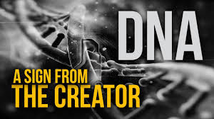 Intelligent Design Poster Dna Intelligent Design By The Creator