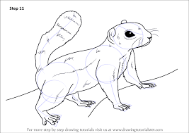 Small Picture Learn How to Draw an Antelope squirrel Other Animals Step by