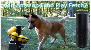 diy automatic ball launcher for dogs echo or cell phone trigger
