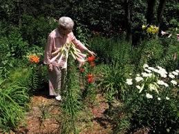 senior gardening activities how to