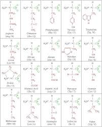 Amino Acid Chart Gorgeous Molecules Amino Acid Chart