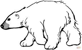 Small Picture Polar Bear 9 coloring page Free Printable Coloring Pages