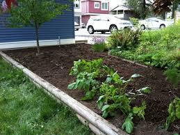 Small Picture backyard 58 Backyard Vegetable Garden Design Ideas Kerala