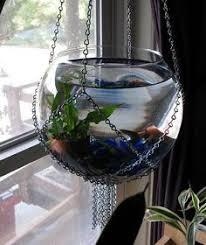 Decorative Betta Fish Bowls Beta fish bowl ideas Gal size mason jars Betta fish tank 30