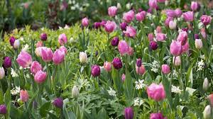 secret of beautiful garden is bulbs how to plant bulbs and how to take care bulbs gardening tips